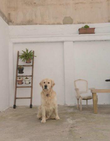 Espacio coworking en Ruzafa Valencia. Nostromo coworking (con patio interior)